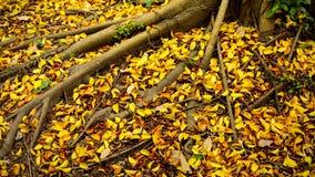 秋叶在秋天树下-秋天风景 免版税图库摄影