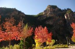 秋叶在科罗拉多 库存照片
