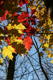 秋叶在阳光下 免版税库存照片