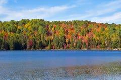 秋叶在阿尔根金族公园安大略 免版税库存图片