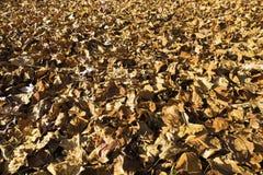 秋叶地毯 免版税库存图片
