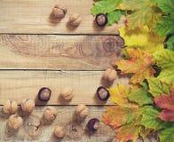 秋叶坚果和栗子在老木背景 图库摄影