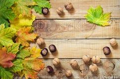 秋叶坚果和栗子在老木背景 库存图片