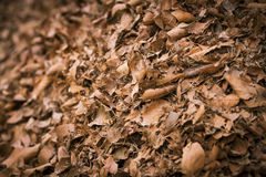 秋叶堆 图库摄影