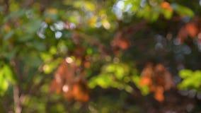 秋叶平阳 影视素材