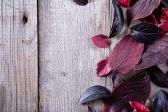 秋叶抽象背景在purpleand红颜色的 免版税库存图片