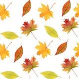 秋叶无缝的样式,手拉的水彩 库存图片