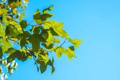 秋叶有天空背景 库存图片