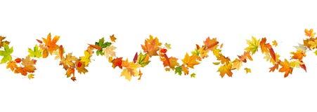 秋叶样式 库存图片
