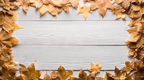 秋叶框架在木板的 库存照片