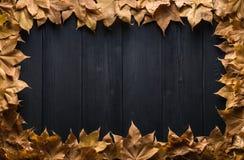秋叶框架在木板的 图库摄影