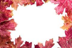秋叶框架 库存照片