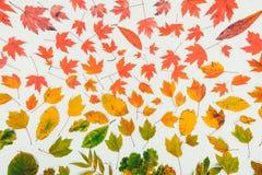 秋叶梯度五颜六色的彩虹叶子样式秋天颜色平的位置,顶视图 季节性背景 葡萄酒定调子 免版税库存照片
