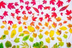 秋叶梯度五颜六色的彩虹叶子样式秋天颜色平的位置,顶视图 季节性背景 库存图片