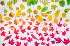 秋叶梯度五颜六色的彩虹叶子样式秋天颜色平的位置,顶视图 季节性背景 免版税库存图片