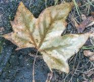 秋叶森林地板 库存图片