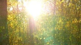 秋叶森林太阳 影视素材
