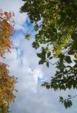 秋叶森林细节红色莓果 库存图片