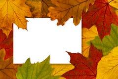 秋叶槭树明信片红色小尖峰黄色 免版税库存照片