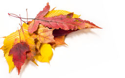 秋叶槭树,桦树,白杨树,栗子,野黑樱桃, rowa 库存图片