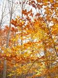 秋叶橙红有些结构树黄色 免版税图库摄影