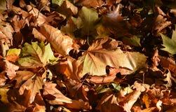 秋叶毯子  库存照片