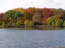秋叶池塘 库存图片