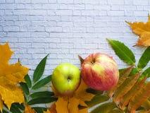 秋叶灰色砖墙果子 库存照片