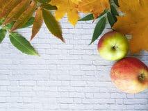 秋叶灰色砖墙 图库摄影