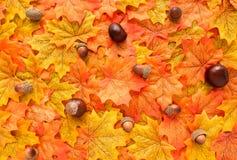秋叶用栗子和橡子 免版税库存图片