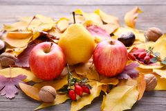 秋叶用莓果和菜在灰色桌上 图库摄影