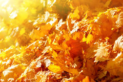 秋叶由在森林道路的下午太阳点燃了 图库摄影