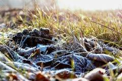 秋叶的弗罗斯特和草在冷的早晨 免版税库存照片