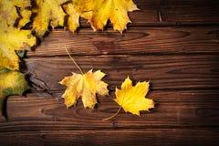 秋叶的收集 图库摄影