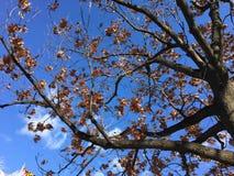 秋叶的改变的颜色 免版税库存照片