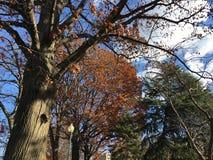 秋叶的改变的颜色 库存图片