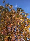 秋叶的改变的颜色 图库摄影