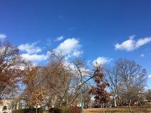秋叶的改变的颜色 免版税库存图片