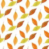 秋叶的无缝的样式,水彩手拉的背景 库存照片