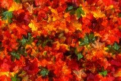 秋叶的无缝的模式 库存图片
