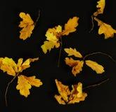 秋叶的构成 免版税库存照片