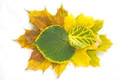 秋叶的构成 免版税图库摄影