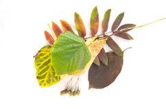 秋叶的构成 免版税库存图片
