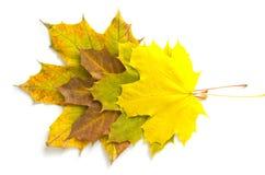 秋叶的构成 库存图片