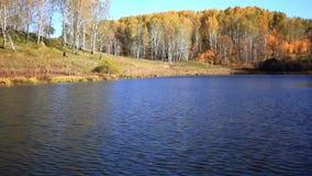 秋叶的湖反射 五颜六色的秋天 影视素材