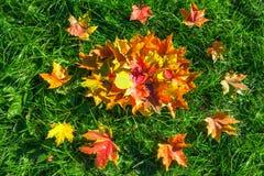 从秋叶的背景 库存照片