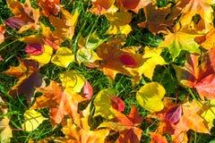 从秋叶的背景 图库摄影