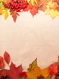 从秋叶的背景 免版税库存照片