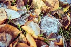 秋叶的顶视图与灰白在11月早晨 免版税库存图片