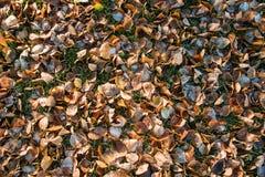 秋叶的顶视图与灰白在11月早晨 免版税库存照片